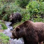 Black forest Bear and Wolf sanctuary (1)